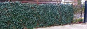 création de clôture grillagées